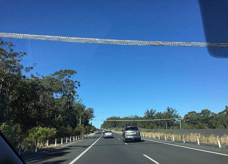 コアラのための面白い吊り橋